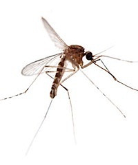 Mosquito Control Tampa