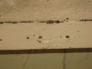 Termite mud tubes, exit holes and blistered wood in a baseboard