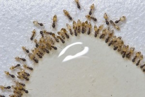 Ants Infest Tampa Home