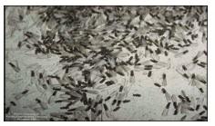 termites1