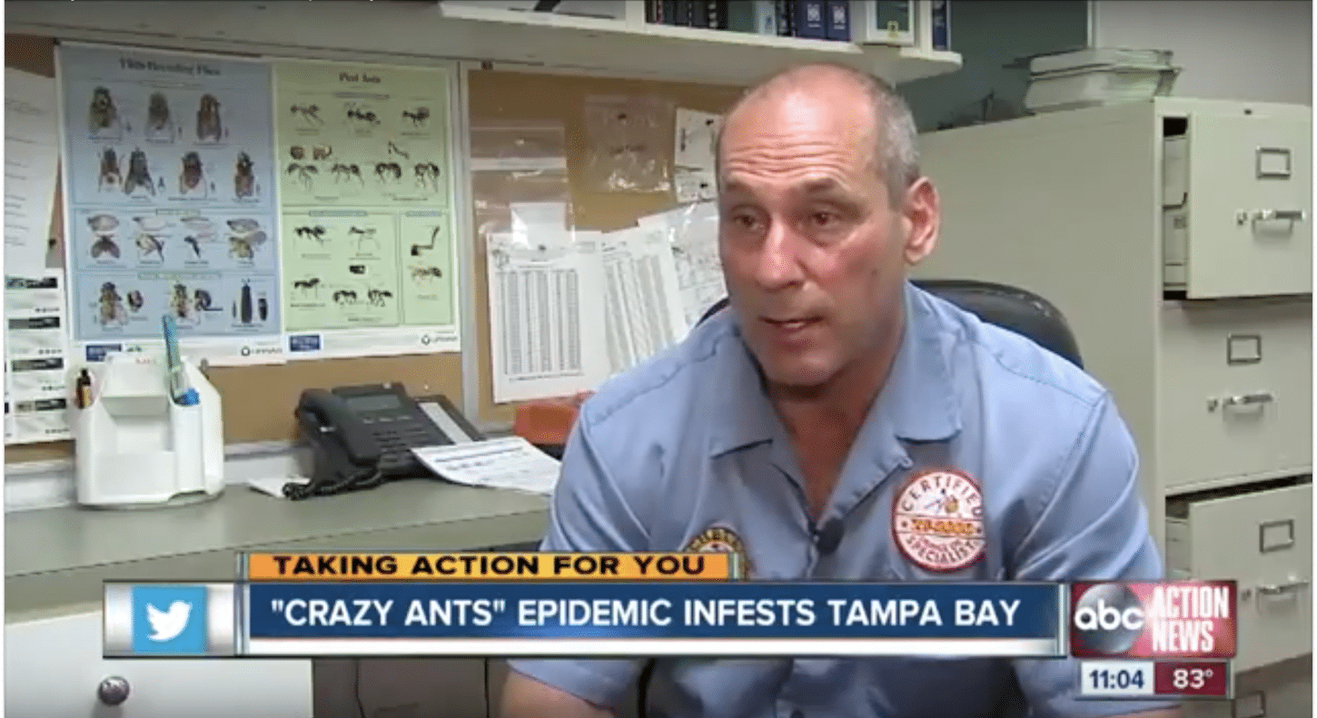 Ants invade Tampa ABC News