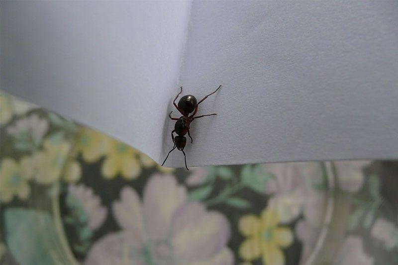 Pest Control Tampa