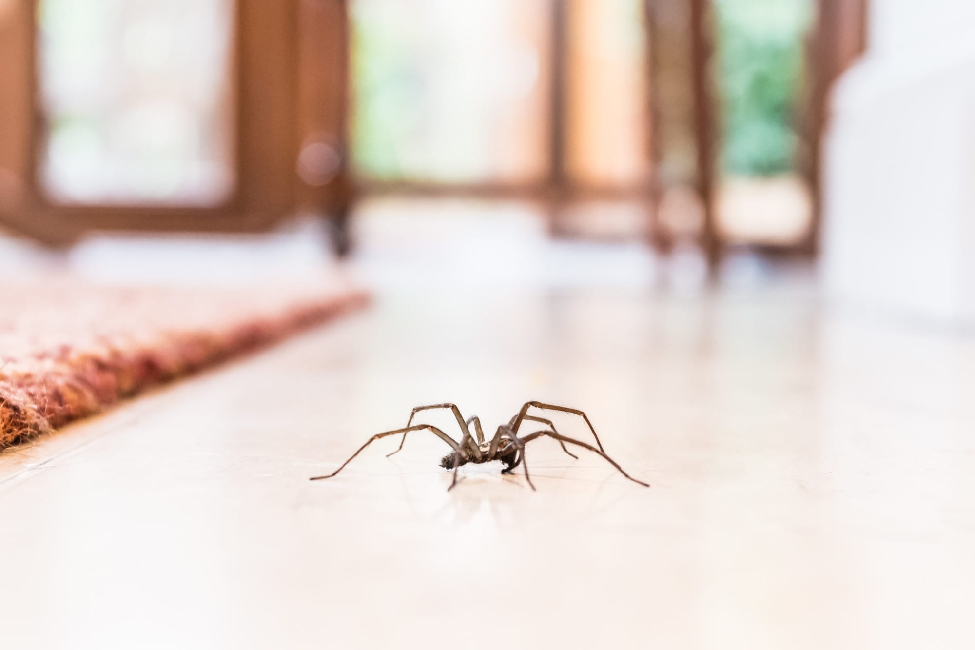 signs of a spider infestation